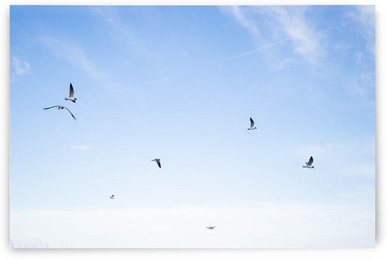 Birds  by Mikayla Storms