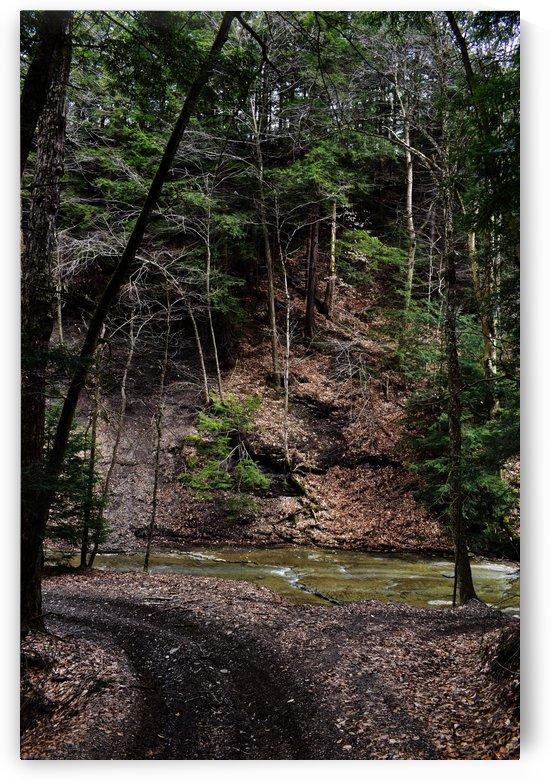 Bottom of Grandpas path by M Brehm