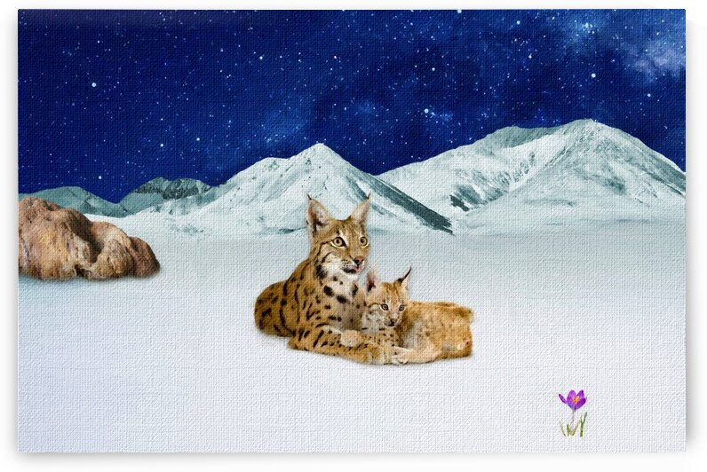 Life in the mountains. Mom Lynx and her baby. by Radiy Bohem