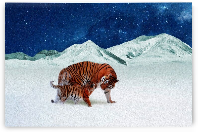 Tigers in the mountains by Radiy Bohem