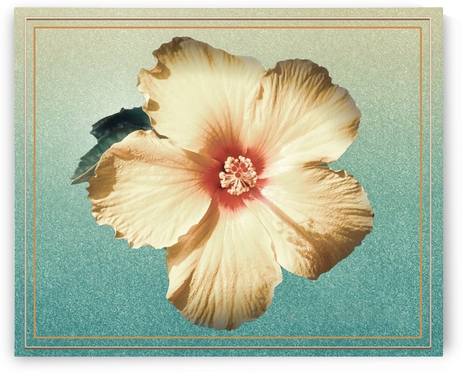 Golden Hibiscus by Connie Maher