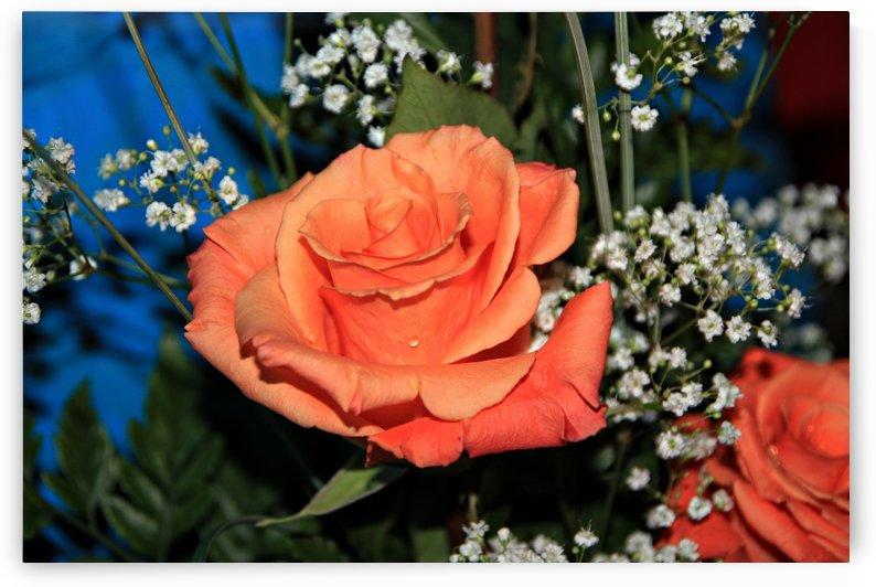 Orange Rose by On da Raks