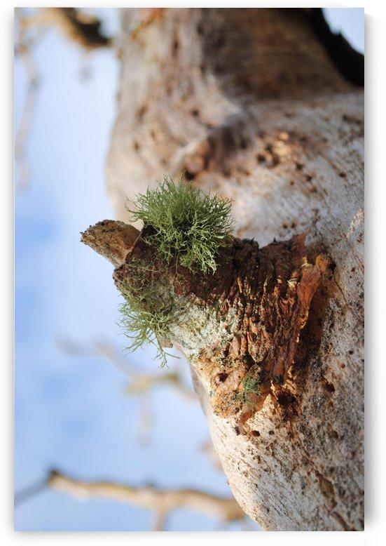 Moss by On da Raks