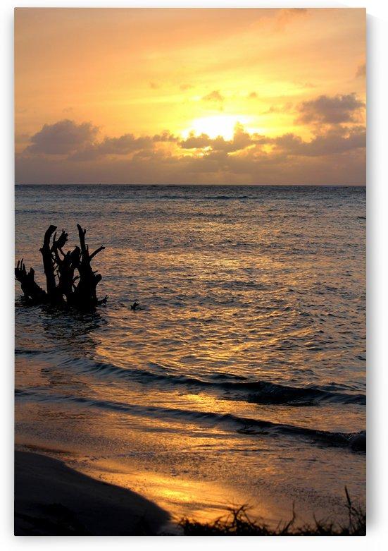 Golden sunset by On da Raks