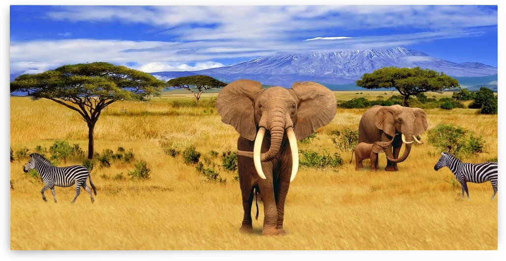 Panorama. Elephant Animals of Africa by Radiy Bohem