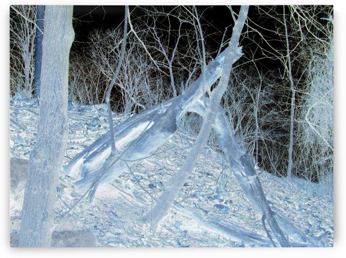 Tree Tracks by Daniel Rothenberg