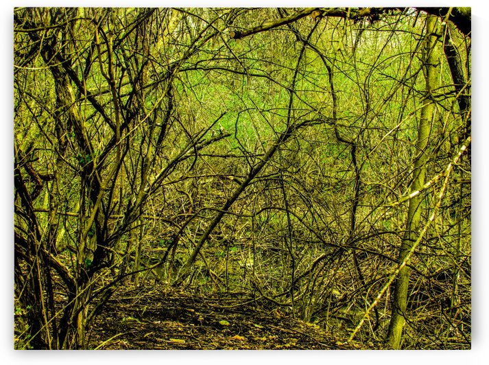Enter Through The Trees by Daniel Rothenberg