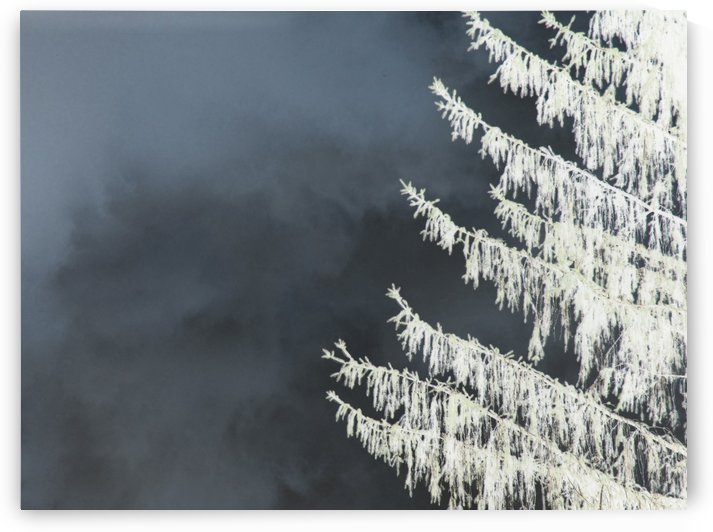 Evergreen by Daniel Rothenberg