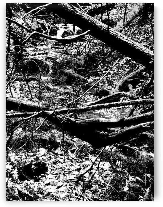 Letchworth Forest  by Daniel Rothenberg