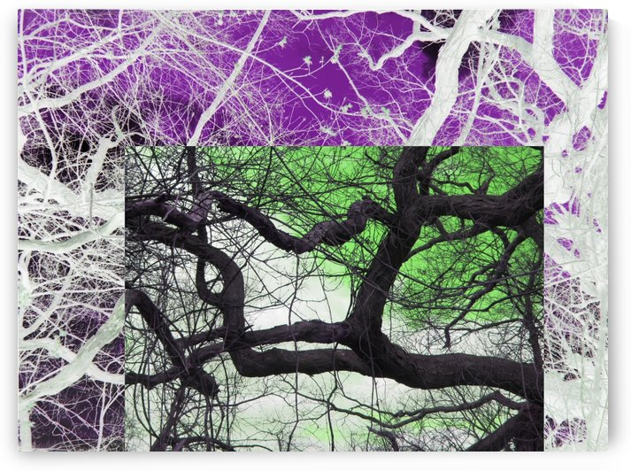 Squarish Tree Dancer by Daniel Rothenberg