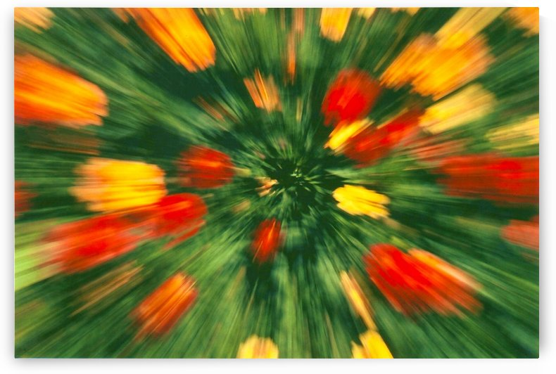 FLORAL ZOOMING 1 by Jean-Jacques MASSOU