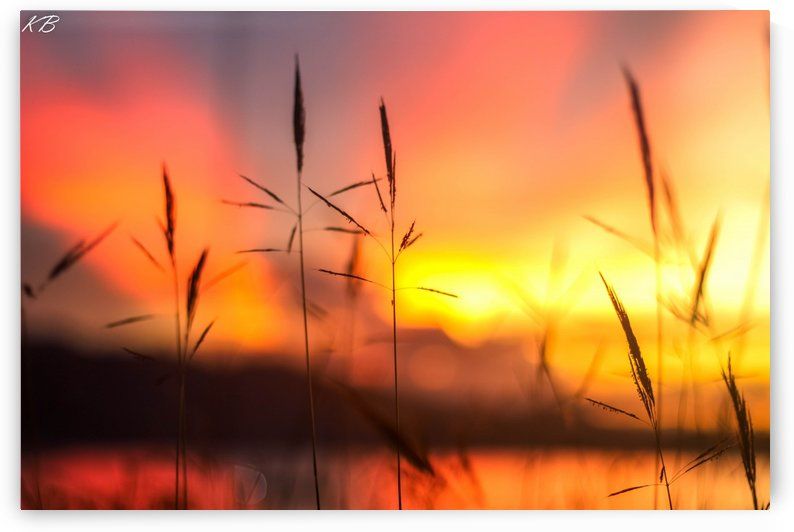 Sunset with grass by Koisen Wanori