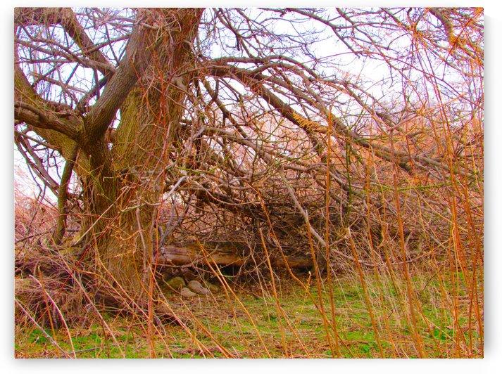 Left Tree Falling by Daniel Rothenberg