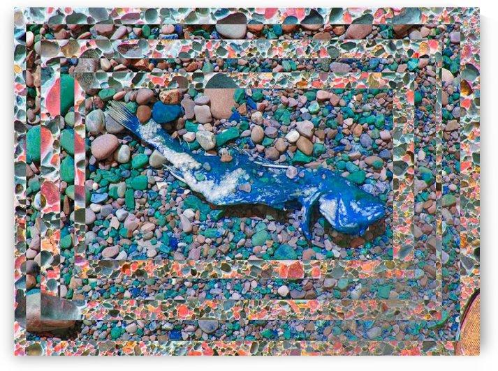 Fishy Pebbles by Daniel Rothenberg