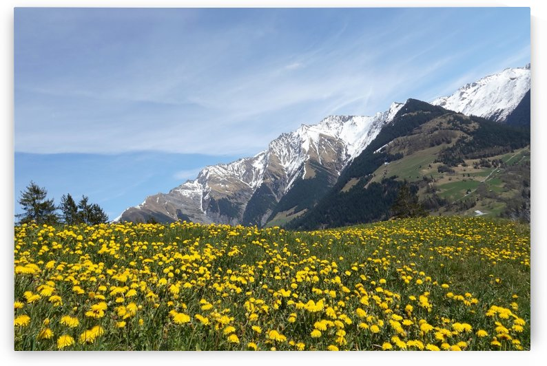 spring mountains graubünden meadow by Shamudy