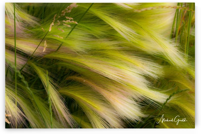 Grasses Of Summer by Mike Gould Photoscapes