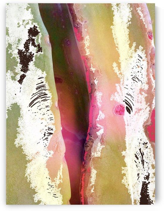 Saguaro Texture by BotanicalArt ca