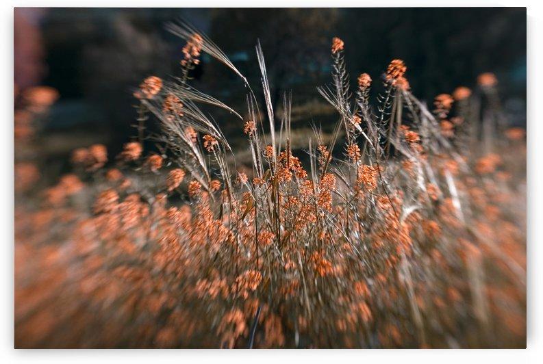Shine 2 by AndreiPodelko