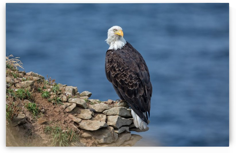 Perched and Proud by Michel Soucy