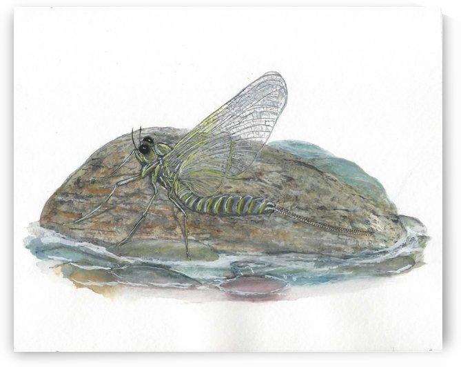 Mayfly on a Rock by Lee Garrett