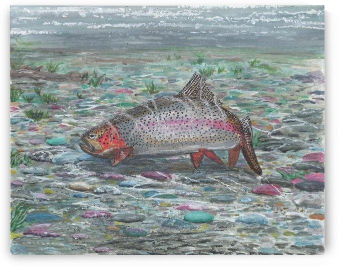 Lone Rainbow Trout by Lee Garrett