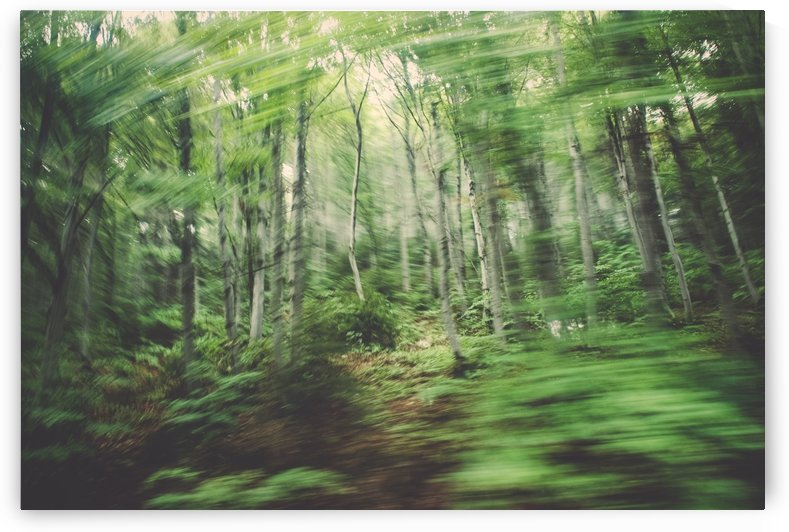 forest by Attila R  Kovacs