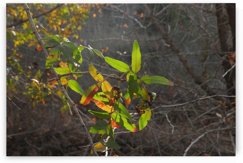 Autumn light by AndreiPodelko