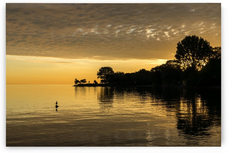 One Seagull - Lake Ontario Sunrise in Lustrous Gold by GeorgiaM