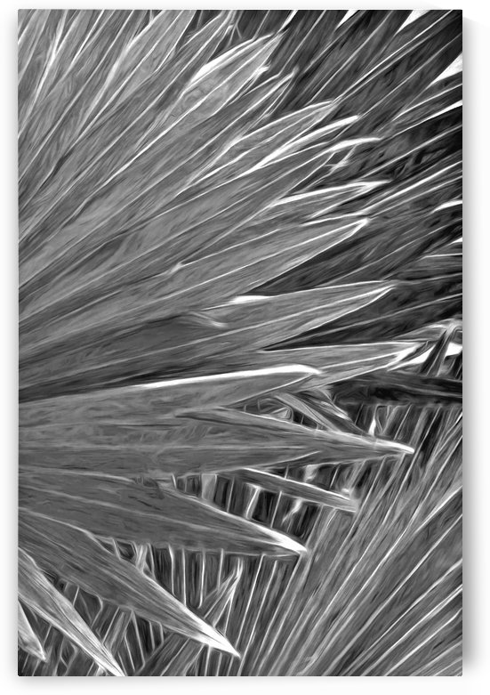 Silver Palms by HH Photography of Florida