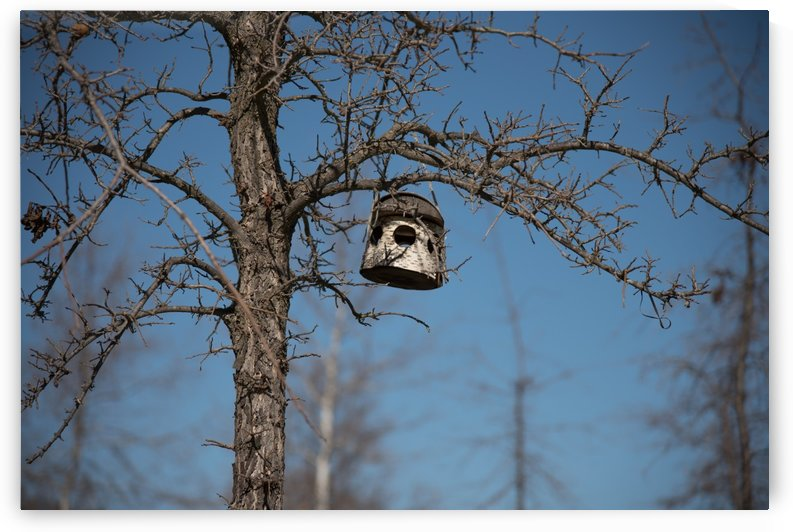 Birdhouse by Konstantin