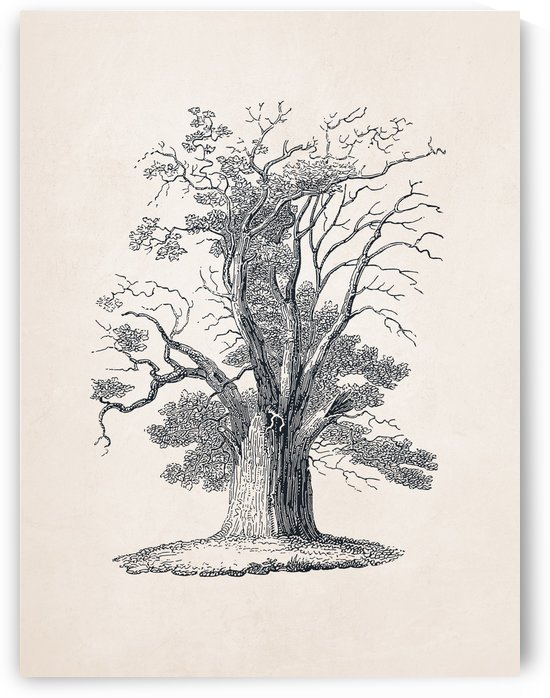 Tree Sketch 05 by Apolo Prints