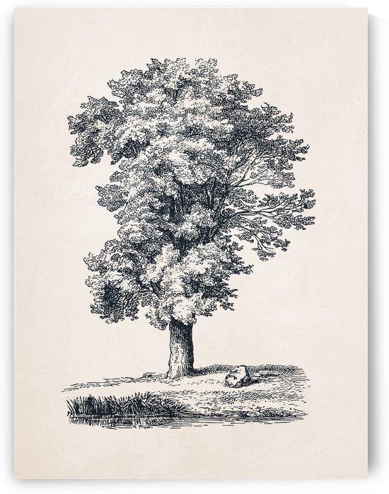 Tree Sketch 07 by Apolo Prints