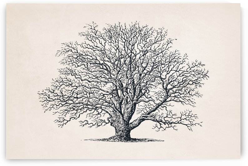 Tree Sketch 51 by Apolo Prints