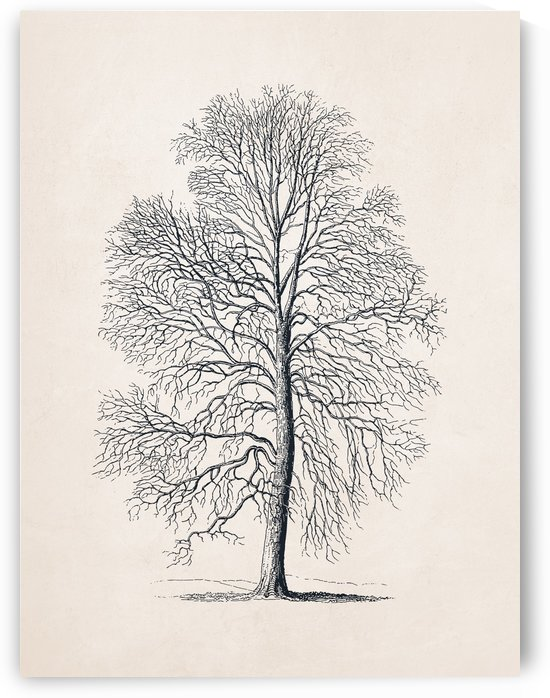 Tree Sketch 08 by Apolo Prints