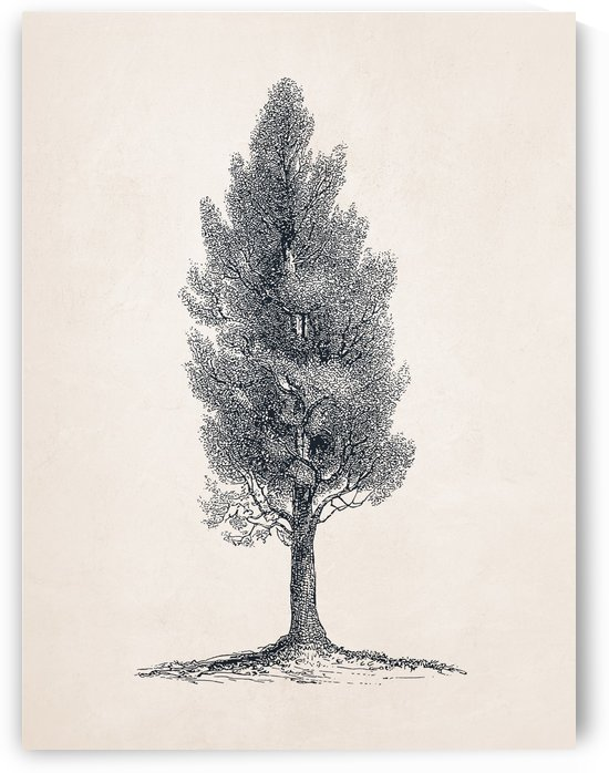 Tree Sketch 10 by Apolo Prints