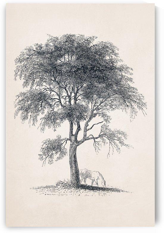 Tree Sketch 09 by Apolo Prints