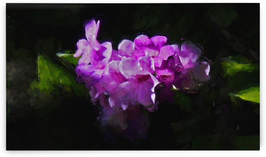 Purple Passion by HH Photography of Florida
