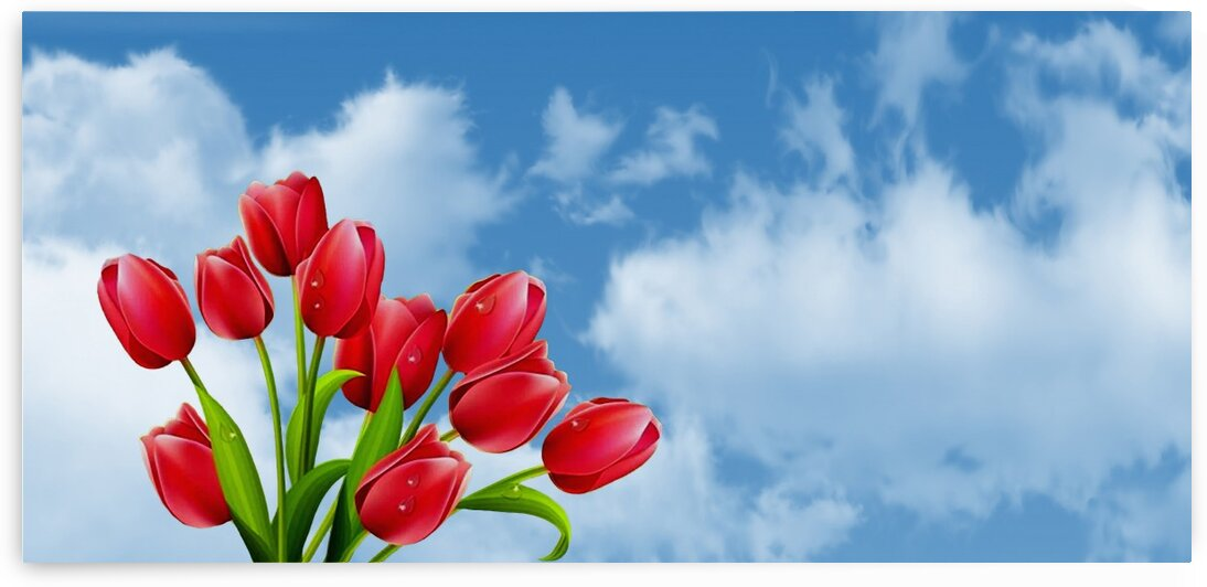 Tulips sky clouds by Radiy Bohem