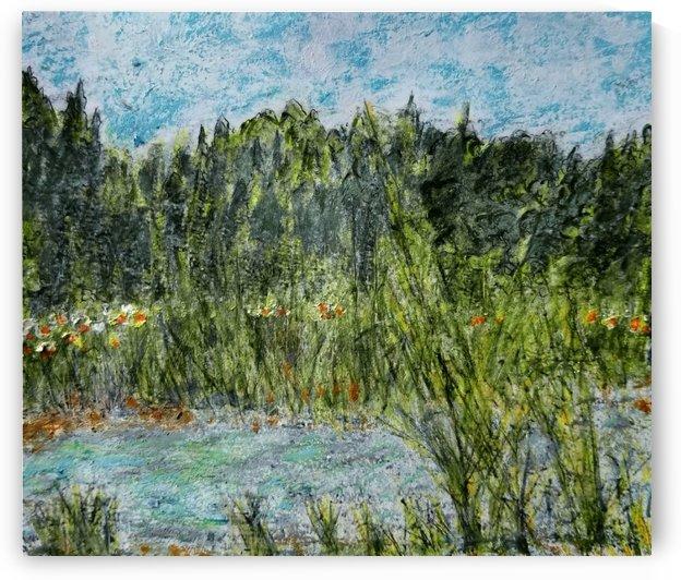The Meadow Across The Creek by djjf
