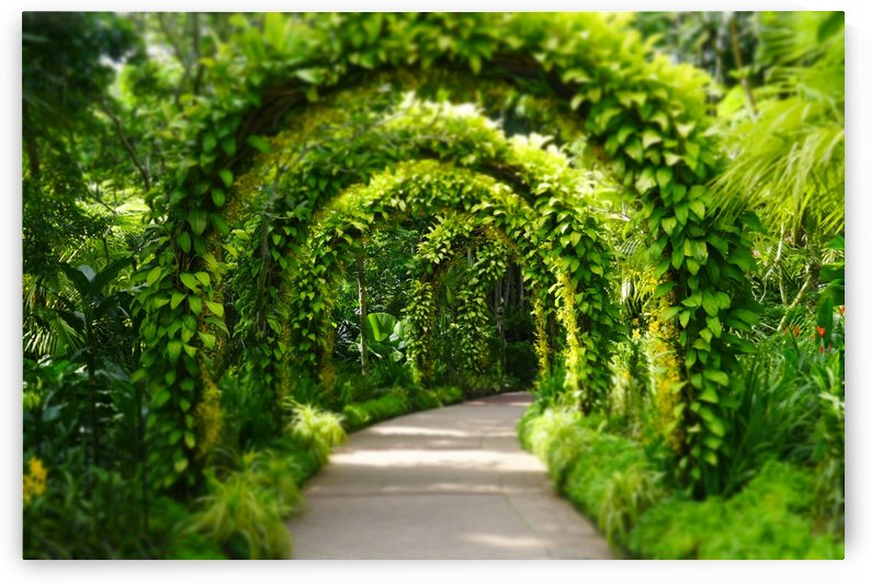 Green Arch by Gui Barret