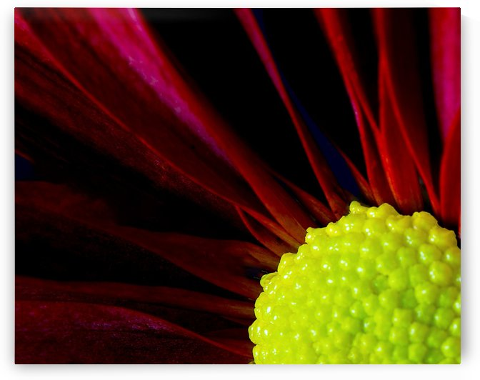 Red & Yellow by Mark A  Harris