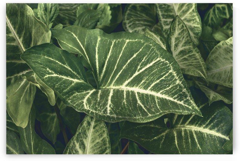 Dark Green Botanic Motif Photo by Daniel Ferreia Leites Ciccarino