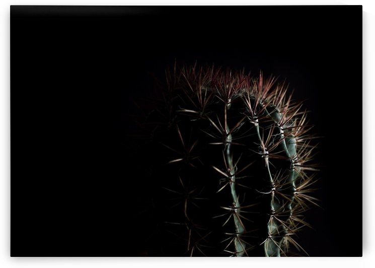 flower plant black background by Sedgraphic