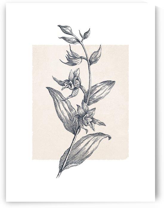 Botanical Sketch 01 by Apolo Prints