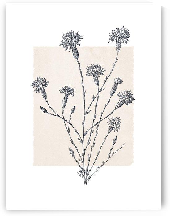 Botanical Sketch 08 by Apolo Prints