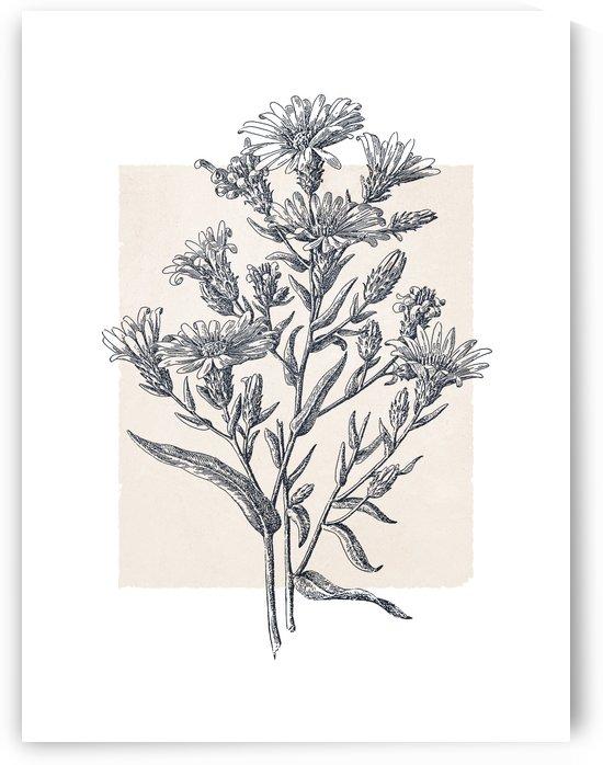 Botanical Sketch 07 by Apolo Prints
