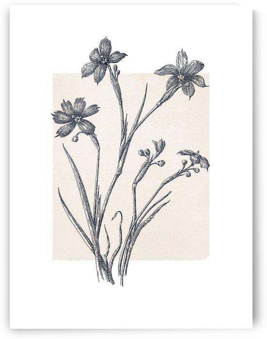 Botanical Sketch 04 by Apolo Prints