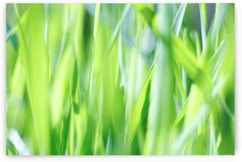 Blueish Green Grass by CreationLife Me