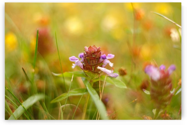 Wilds of the Meadow by CreationLife Me