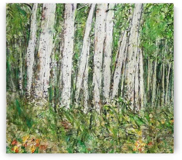 The Birch Woods by djjf
